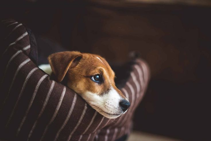 Pet Lumps and Bumps:  What's an Owner to Do? | Animal Internal Medicine and Specialty Services Blog