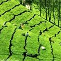 Grand Package Tour of Kerala for 9 days - http://www.nitworldwideholidays.com/kerala-tour-packages/grand-kerala-package-tour.html