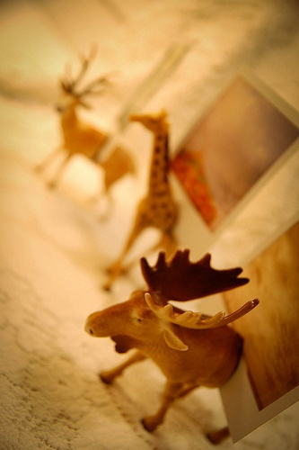 plastic animal photo holders