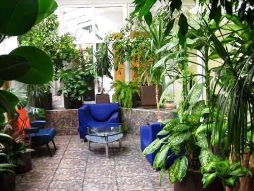 Комнатные растения фото и названия: Комнатные растения для темных помещений http://www.myflora.com.ua/index.php?option=com_content&task=view&id=616&Itemid=116