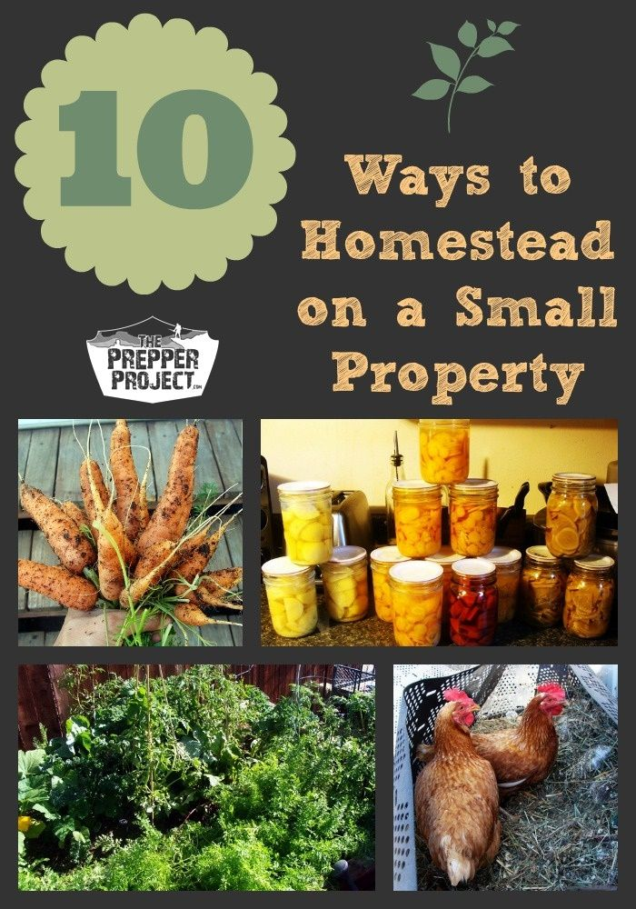 10 Ways to Homestead on a Small Property - ThePrepperProject.com / Posted May 5, 2014