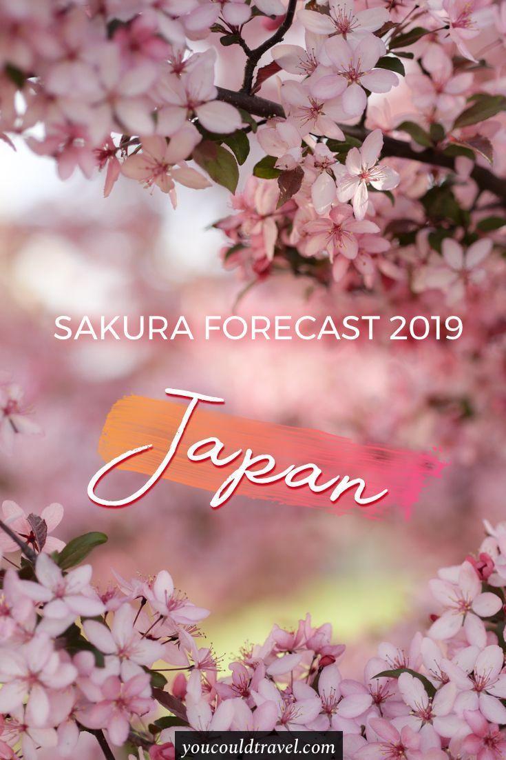 Japan 2020 Cherry Blossom Festival Updated Dates Travel Japan Spring Japan Travel Japan