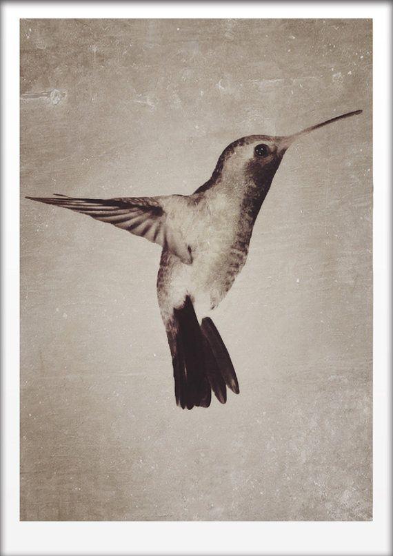 Hummingbird Vintage style A4 Art print by Finandivy on Etsy, $25.00