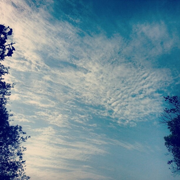 The serene blue of the evening sky is broken by the surreal white clouds while the two trees give t that edge!