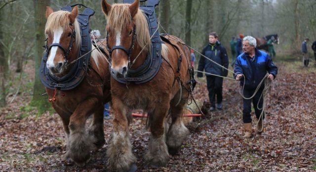 Zèlng (Sellingen) - trekpaardenevenement