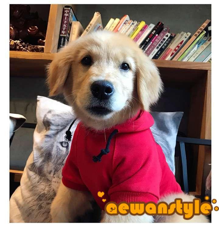 犬とのお揃い 親子服 カワイイ オフホワイト ペット服 おしゃれ 中型犬 激安通販 白い犬 ペット服 犬