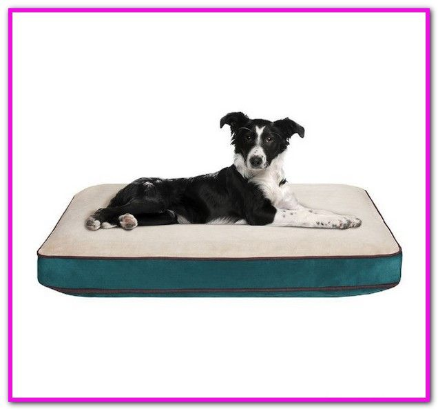 Halo Dog Bed Petco Create A Cozy Snoozing Spot For Your Canine With A Dog Bed That Meets Their Needs From Small To Orthopedic Dog Bed Dog Bed Dog Bed Large