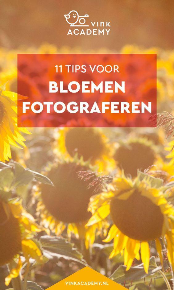 Fotografie tips Nederlands: bloemen fotograferen. Geniet van de prachtige bloemen in de zomer, zoals bijvoorbeeld een veld met zonnebloemen. Leer hoe je dit mooi en goed fotografeert. #natuurfotografie