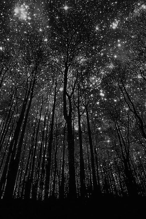 """Looking up at the stars... """"Sillhouettes"""" (cropped from original colour photo), Geneva, Switzerland by Harry Finder. °"""