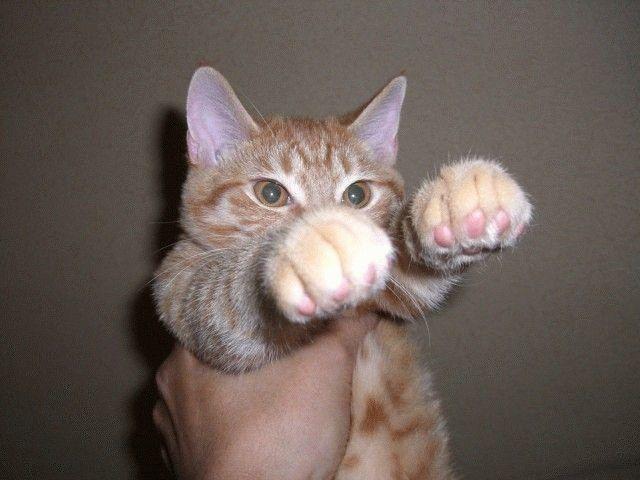 Смешные картинки держим кулачки, поздравление подругу поздравление