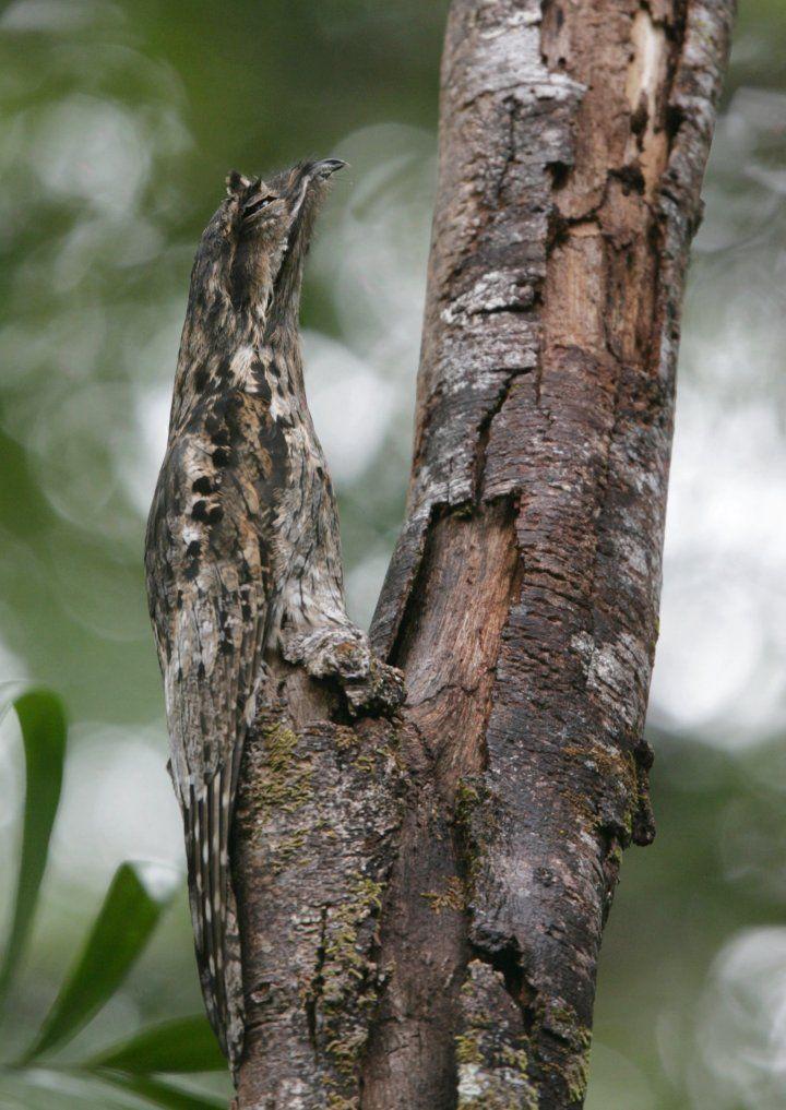 #bird #camouflage