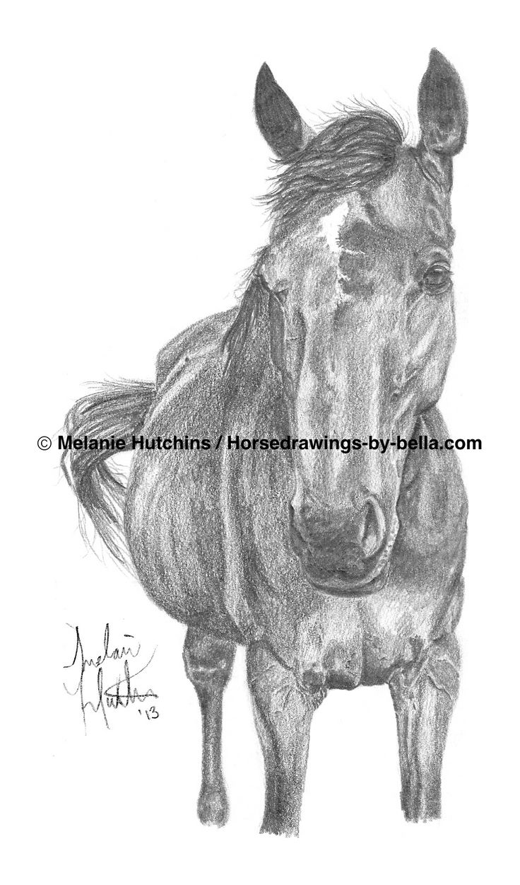 Portrait of Tess.  Copyright Melanie Hutchins / Horsedrawings-by-bella  Follow me on Facebook: https://www.facebook.com/Horsedrawingsbybella.MelanieHutchins Twitter: https://twitter.com/MelHTheArtist YouTube: https://www.youtube.com/channel/UCZDEjNKuowAo92BhnMWWBzA