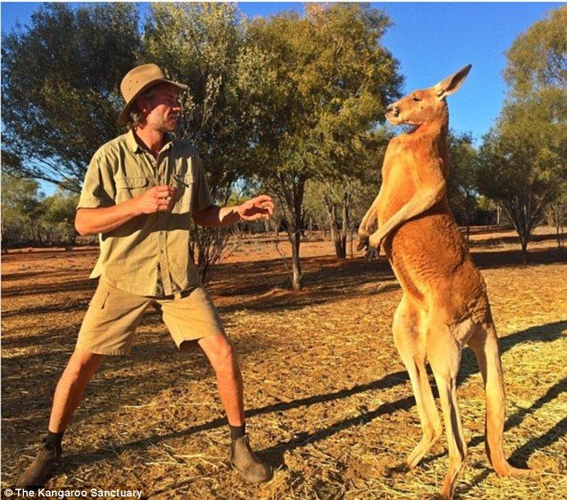 'His daily exercise regime is sparring [kickboxing] his rivals and chasing his human 'Mum', me,' Brolga (left) told Daily Mail Australia