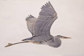 Blue Heron- for my mom <3