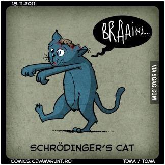 Schrodinger's cat | Schrodinger | Pinterest