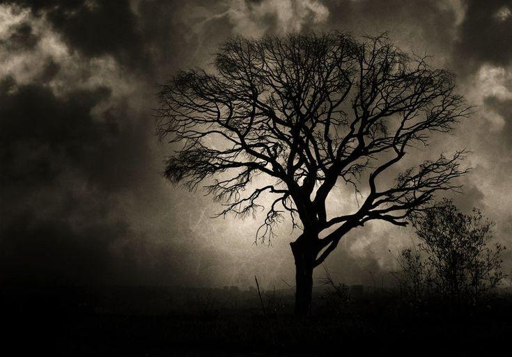 Dark tree by ~twicemood on deviantART | Árboles ...
