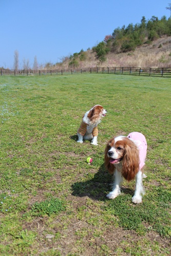 Okayama 岡山(おかやま) 岡山農業公園 ドイツの森 ドッグラン ワンちゃんとのびのび遊ぼう!  西日本最大級のドッグラン完成! ワンちゃんをリードから離してのびのび走らせよう!  ■料金 無料  大・中型:960平方メートル 小型:290平方メートル 合計:1250平方メートル ※犬の排泄物などはきちんと処理してください。 ※犬による事故トラブルは飼主ご本人の責任となり、ドイツの森は一切責任を負いません。