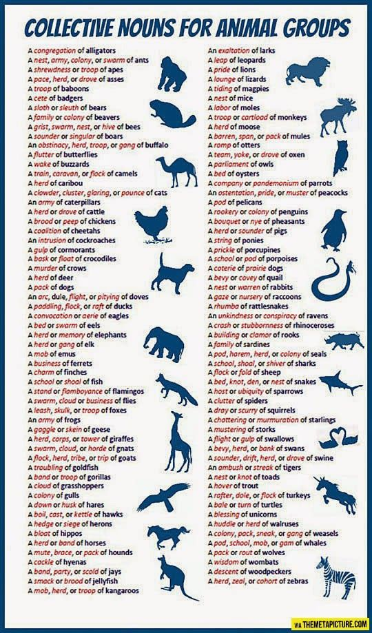 Forum | Learn English | Collective Nouns for Animal Groups | Fluent Land