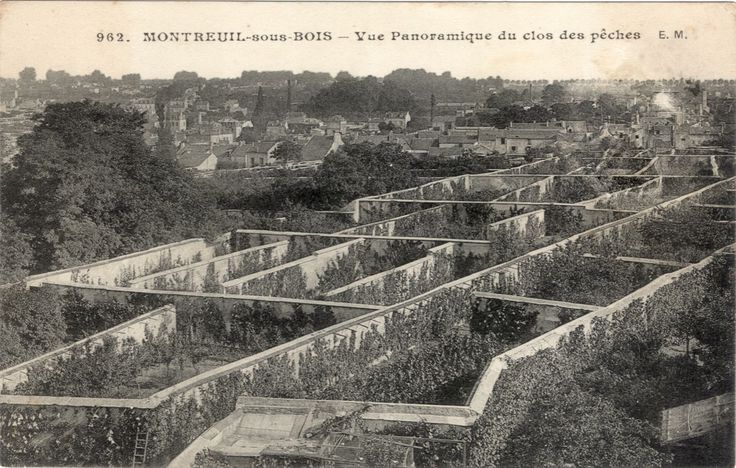 Les murs à pêches furent créés à Montreuil au XVIIe siècle. Ces murs aux pieds desquels poussaient les pêchers servaient à conserver la chaleur, permettant ainsi la culture de pêches habituellement réservée au climat plus doux du sud de la France.