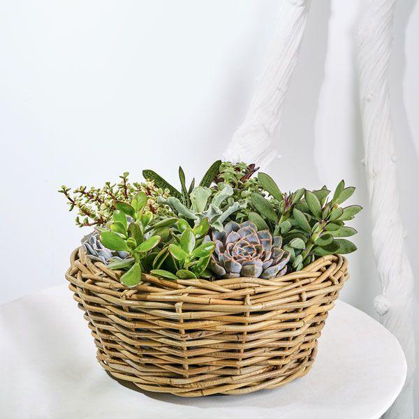 Mand Succulenten.  Velen van u bezoeken met regelmaat een graf of een herdenkingsplaats van uw overleden dierbaren. Het is dan niet ongebruikelijk om bloemen of planten te plaatsen. Gemaakt door Afscheid met Bloemen.