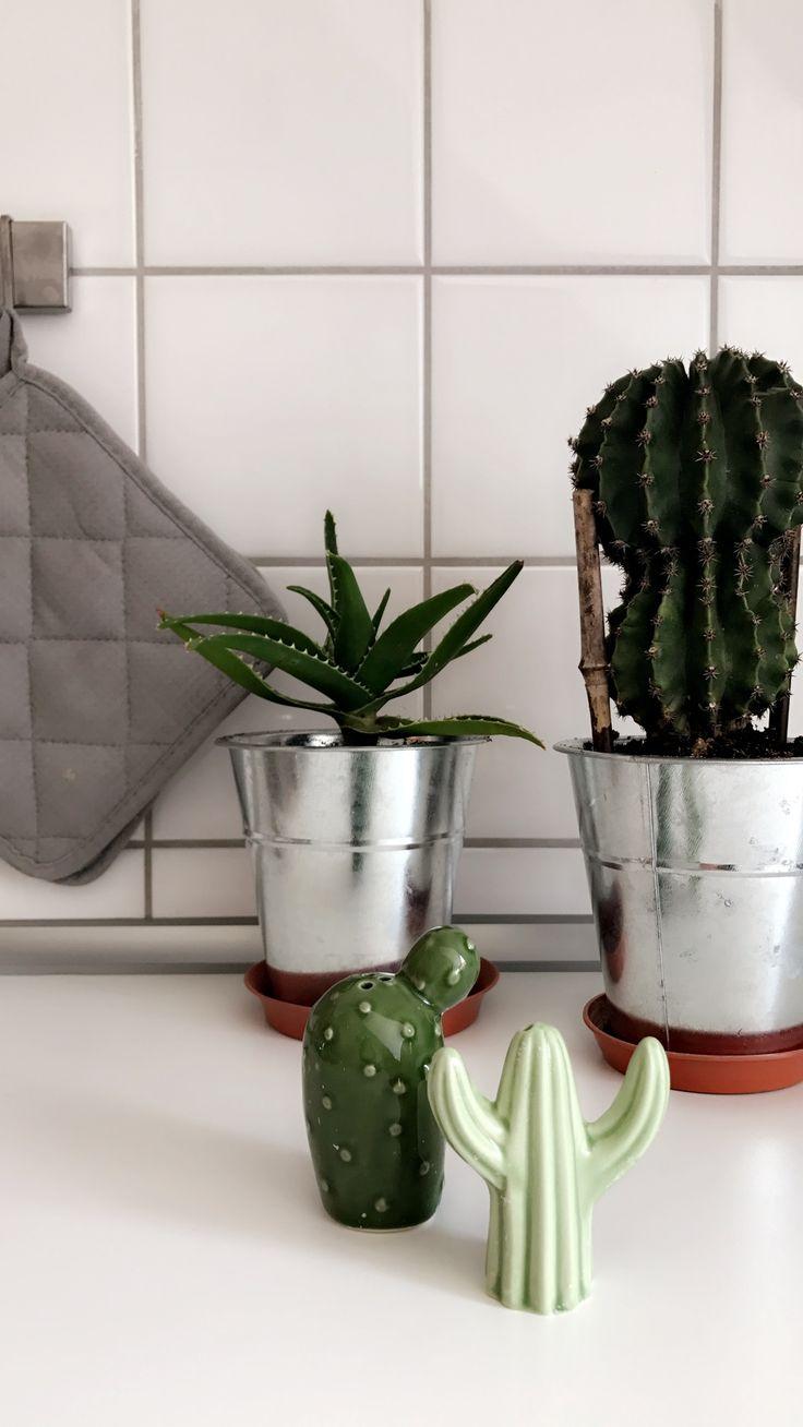 Fresh Der Kaktus ist das Must have f r alle Interior Trendsetter Nat rlich darf dieses