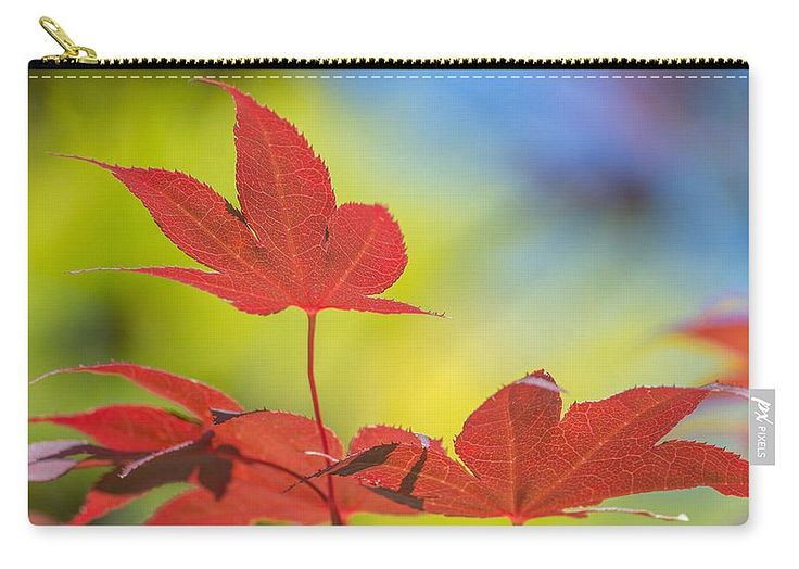 "Autumn Colours Carry-All Pouch by Racheal Christian. Our pouches are great.  They're availabe in sizes from 6"" x 5"" up to 12.5"" x 8.5""  Each pouch is printed on both sides (same image)."