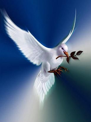"The Dove of Peace. Pentecost is coming, June 4th. Do not depart from Jerusalem, but wait for the promise of the Father … you shall be baptized with the Holy Spirit not many days from now"" Acts 1:4–5 …"