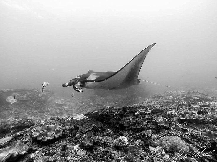 Swimming with Manta Rays in Bali! http://travelinfools.com/swimming-manta-rays-bali/