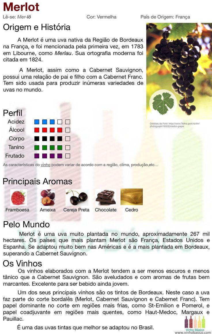 Merlot vinhobasico