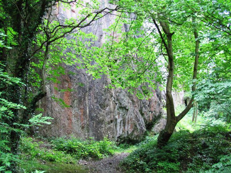 Image result for forest bushes Shrubs, Plants, Bush
