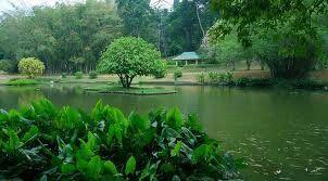 The lake at the botanicle garden Sri Lanka.contact us.susantha2803@gmail.com