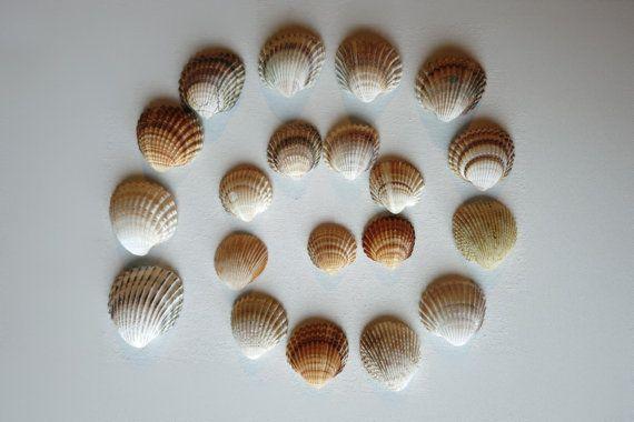 20pcs Orange/Brown Ark Clam Seashells  Jewelry by MrsBeachComber