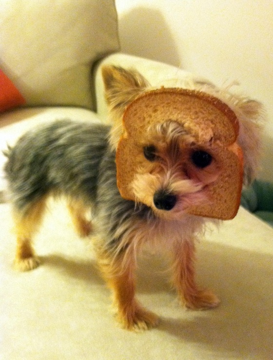 I don't know why a slice of bread on a dog's head is so funny to me, but it is lol