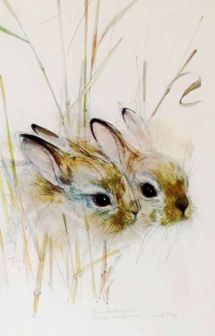Epingle Par Evgeniya Sur Art Animaux D Aquarelle Peinture D Animal Dessin Lapin