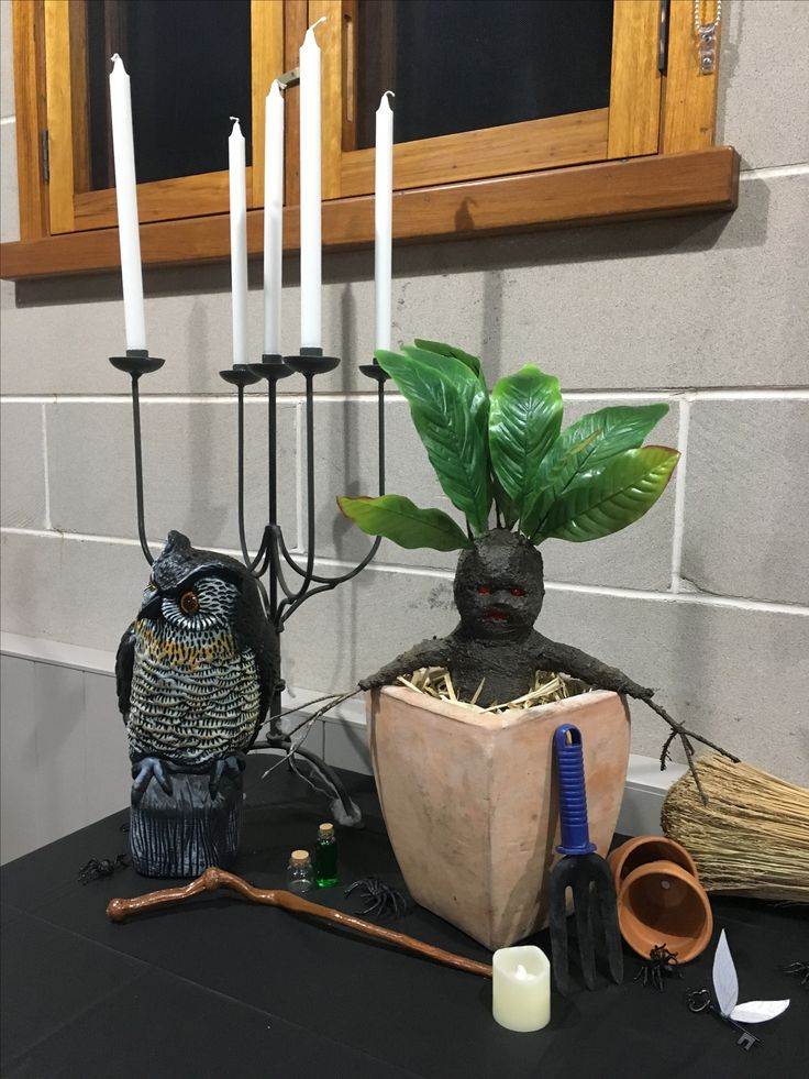 Mandrake / owl / harry potter