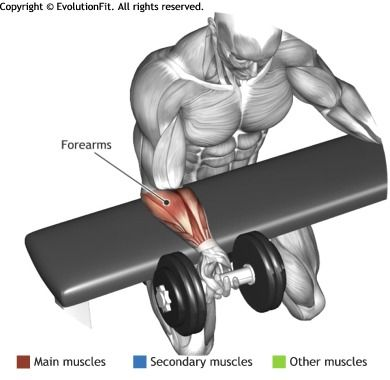 FOREARMS -  PALMS UP DUMBBELL WRIST CURL OVER A BENCH