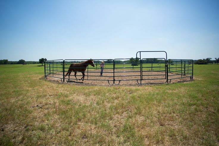 Mesa Pate working horse in Economy Round Pen. Available in 40', 50', 60', and 70' diameters, these Economy Round Pens are constructed from 12' Economy Panels and a 6'x9' Economy Bow Gate.