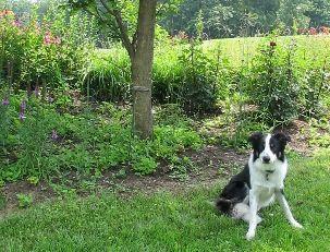 Garden Design For Dogs 171 best dog friendly garden ideas images on pinterest | garden
