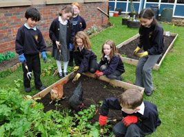 Useful post that talks about the specific steps on how to set up a school garden.