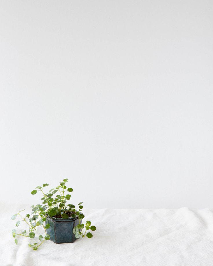 Pilea Depressa a.k.a. Miniature Peperomia in a self-watering pot.