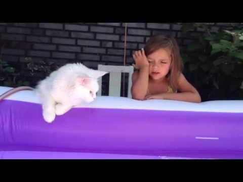 Maine Coon, Waterlovers. Rosar Elara Feline Fantasy  waiting with her BFF   (best feeding friend  ) for the pool to be ready.