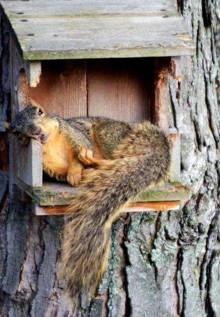 I'm not sure what happened, but I wish every squirrel has a comfy bed