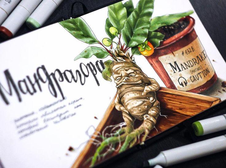 Мандрагора, которой в средневековье чего только не лечили: тоску страх и депрессию (налетай, ребята), одержимость бесами и эпилепсию. Ну и любовные и приворотные зелья  с мандрагорой в первых рядах.  А во всем внешность виновата -корень растения сильно смахивает на человечка ♂️ 1/4 #lk_sketch_marathon  #art_markers, #art_we_inspire, #topcreator , #sketch, #illustration, #скетч, #иллюстрация, #скетчбук, #ботаника, #marker, #copicmarker, #copic, #copicart, #одинденьсхудожником,  #savannask...