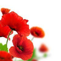 садовые цветы: В ЗНАК ЛЮБВИ И УВАЖЕНИЯ.