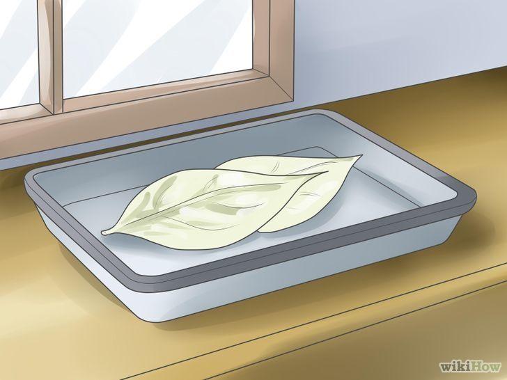 Изображение с названием Dry Leaves Step 1