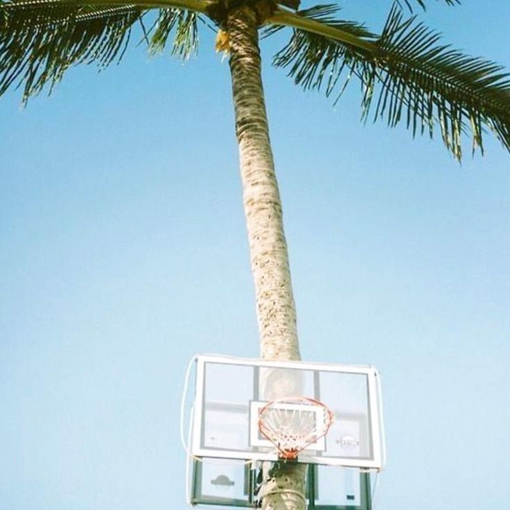 basketball dreams ☁️ #sunday
