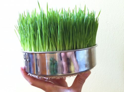 Sprouting Trays