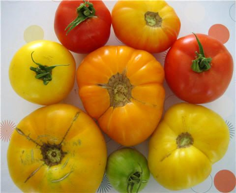 Saving Heirloom Tomato Seeds  *Soak in water (seed)3-5 days COVERED  *Strain seeds(floaters=dead / sinkers=alive;keep)  *Dry live seeds and store for use next year