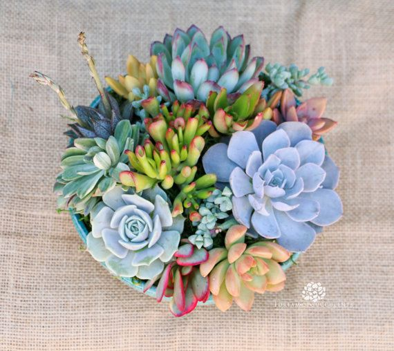 Succulent arrangement in turquoise round by iDreamOfSucculents