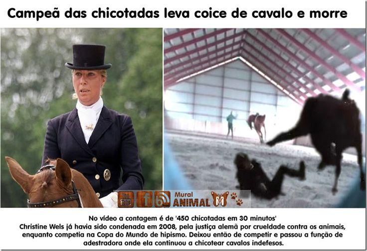 Mural Animal: Campeã das chicotadas leva coice de cavalo e morre